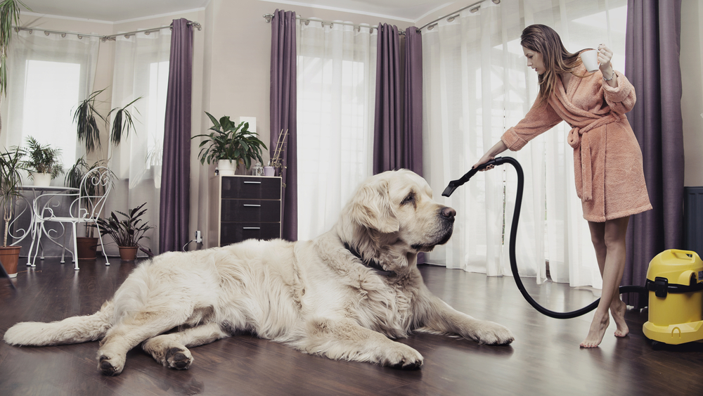 Woman cleaning a home around a large dog